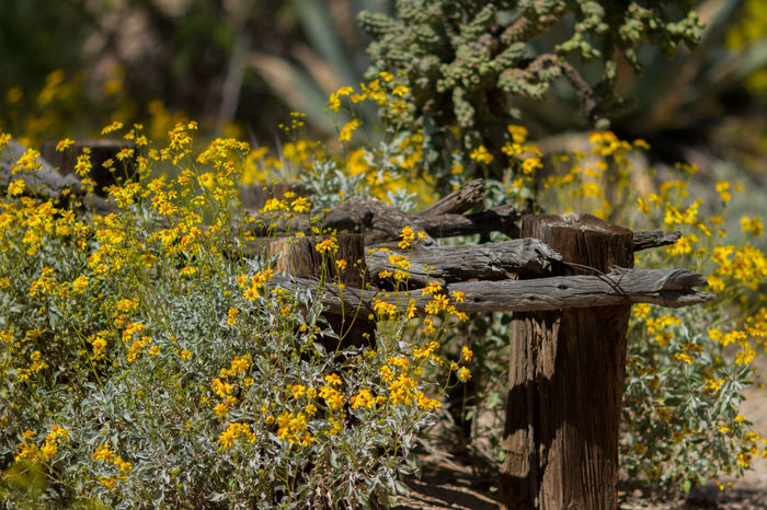 Abundance Beauty In Nature Desert Eric Barnes Photography Field Flower Green Green Color Growing Leaf Nature No People Outdoors Southwest  Springtime Wildflowers Yellow The Great Outdoors With Adobe
