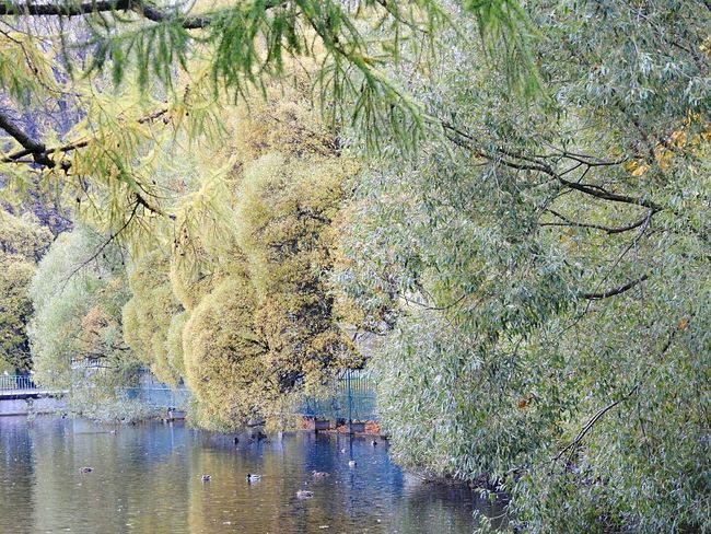 Deep Blue Water Tree No People Water Nature Day Beauty In Nature Tavrichesky Garden Lake Autumn🍁🍁🍁 Walking Around Colors Of Sankt-Peterburg Sankt-Petersburg Russia