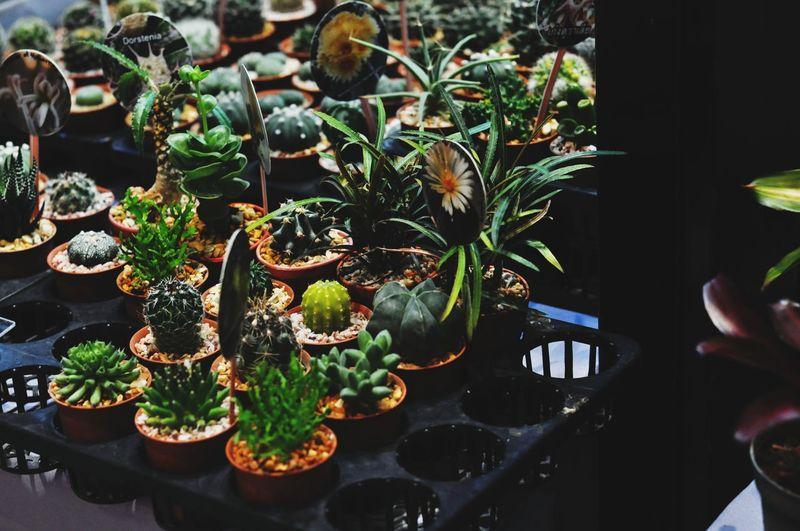 Human Hand Close-up Plant