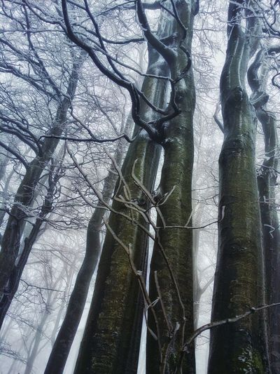 Neujahrsspaziergang Hugging A Tree Nature Nature_collection Hiking