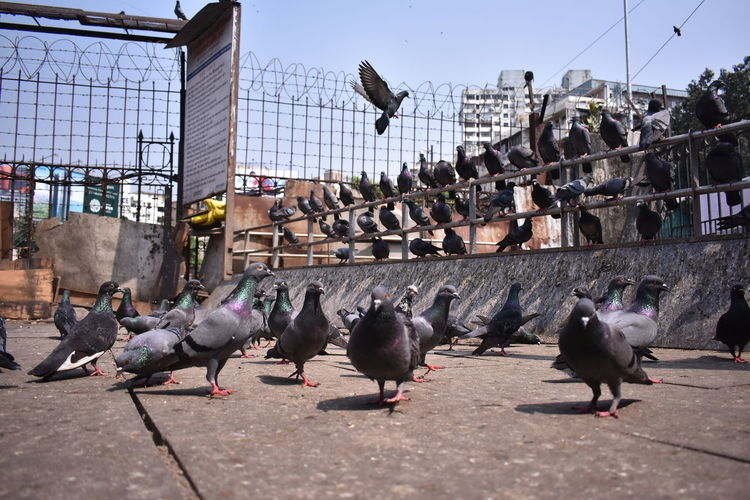 Pigeons perching in a city
