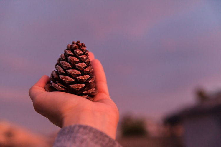 Cropped hand holding pine cone against sky during sunset
