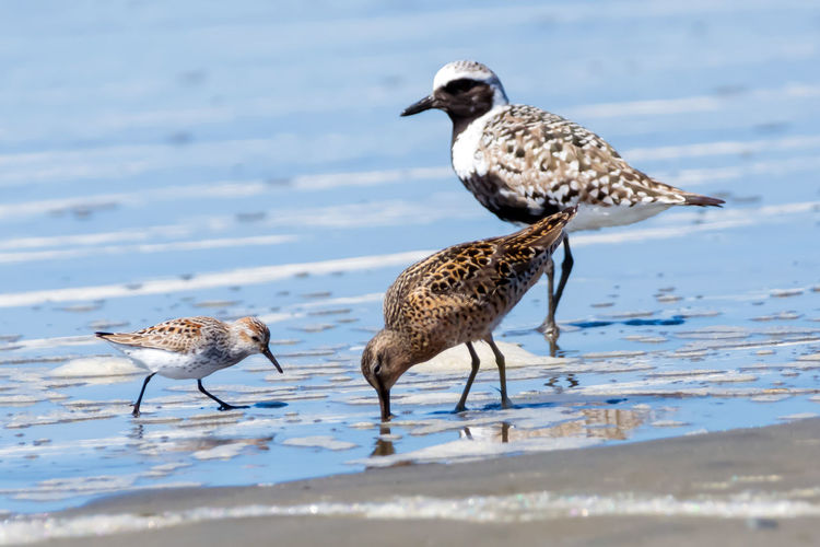 Shore birds of