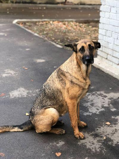 Dog waiting One