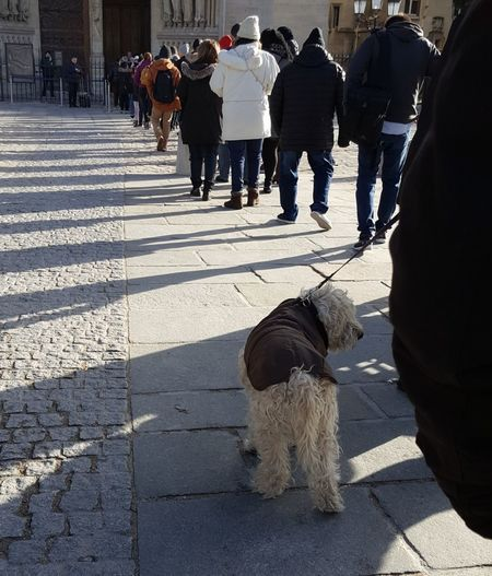 Dog Of The Day In Line Please Dog Love My Paris Lookoftheday What Are YOU Looking At? Pleasecomment Me Too Look At What I Found Dog Pets Winter Animal Domestic Animals Shades Of Winter Adventures In The City Focus On The Story