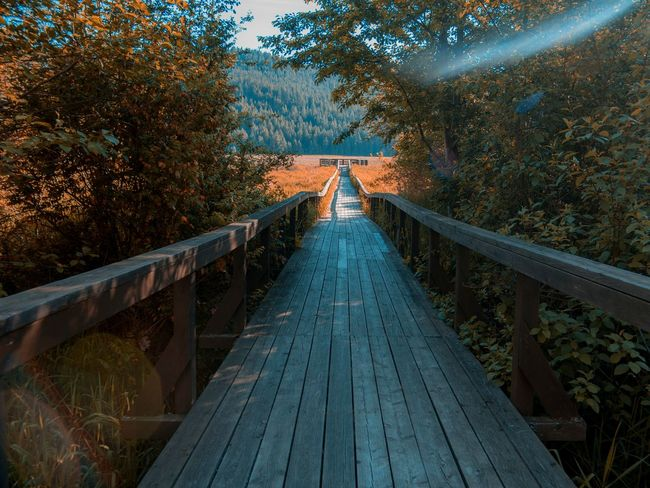 View at the liberty lake boardwalk Tree Forest Outdoors Nature Beauty In Nature Sky Growth Sigma 18-35 F1.8 Colorgrading Movielook Plant Lake Marsh Washington Summer Naturephotography Cinematography Cinematic Beautiful First Eyeem Photo EyeEmNewHere