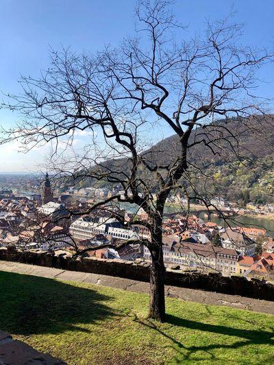 Heidelberg Blich vom Schloss Tree Plant Architecture Bare Tree Building Exterior Built Structure Branch