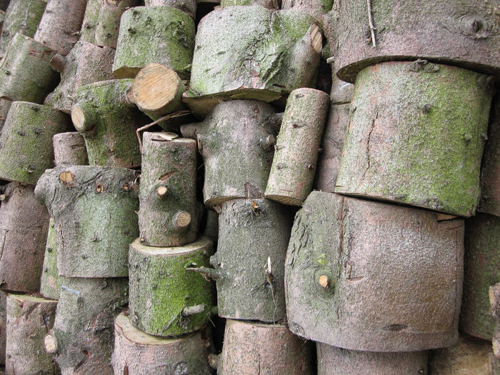 stack of sawn stems Wood Tree Stem Sawn Green Nature Stack Collection Fire Wood Fuel Wood Bark No People Large Group Of Objects Day Outdoors Pattern Green Color Wood - Material Focus On Foreground