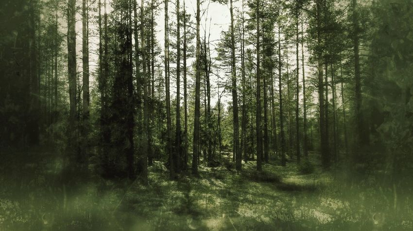 Tree Nature No People Green Color Outdoors Day Growth Beauty In Nature Forest Grass Scenics Mystery Finland Adventure