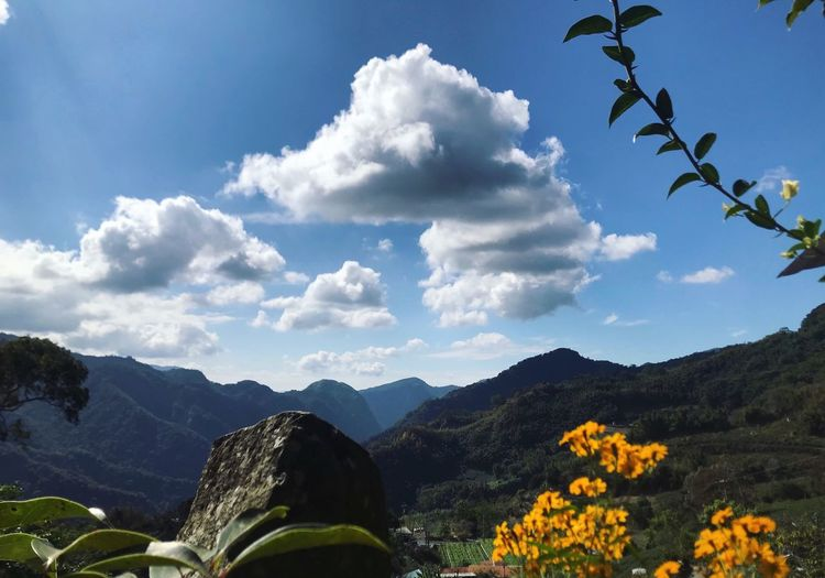 Camping 阿將的家 Sunny 阿里山 Sky Cloud - Sky Beauty In Nature Mountain Scenics - Nature Nature Flower Environment No People Tree
