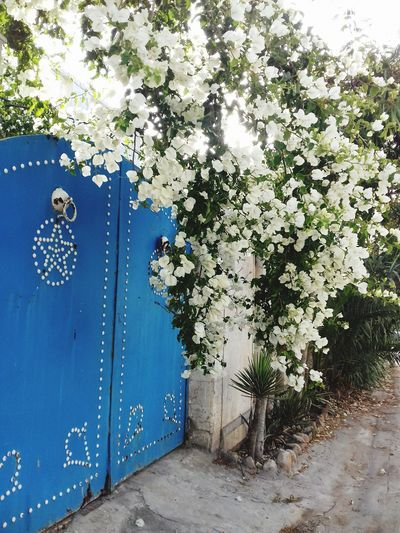 Tree Blue Door Close-up Sky EyeEmNewHere