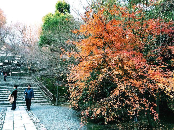 At 鹿苑寺(金閣寺) Kinkaku-ji Temple Kyoto