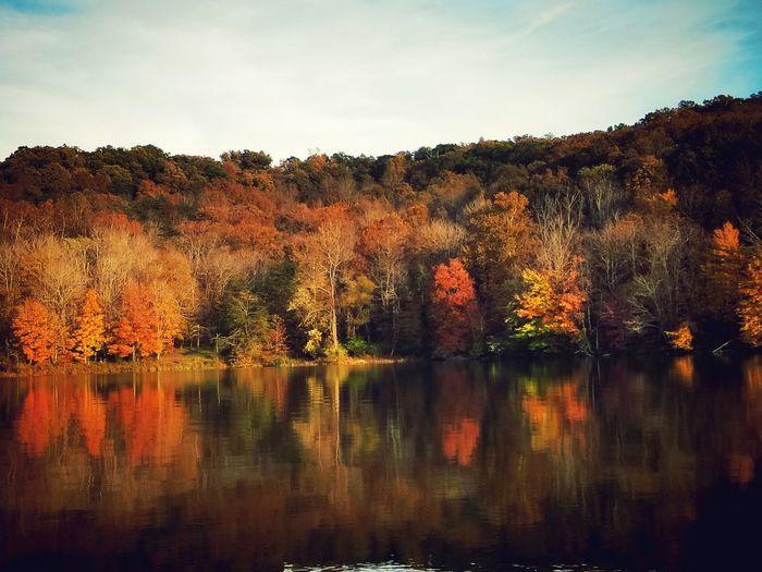 lake Tree Water