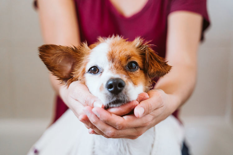 Close-up of hand holding small dog