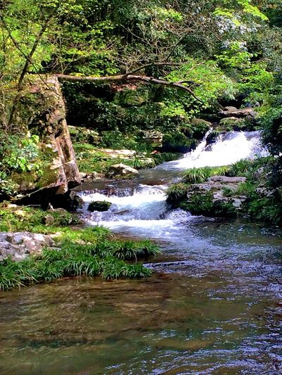 Stream Waterfall River River View Riverside Nature Nature_collection Nature Photography
