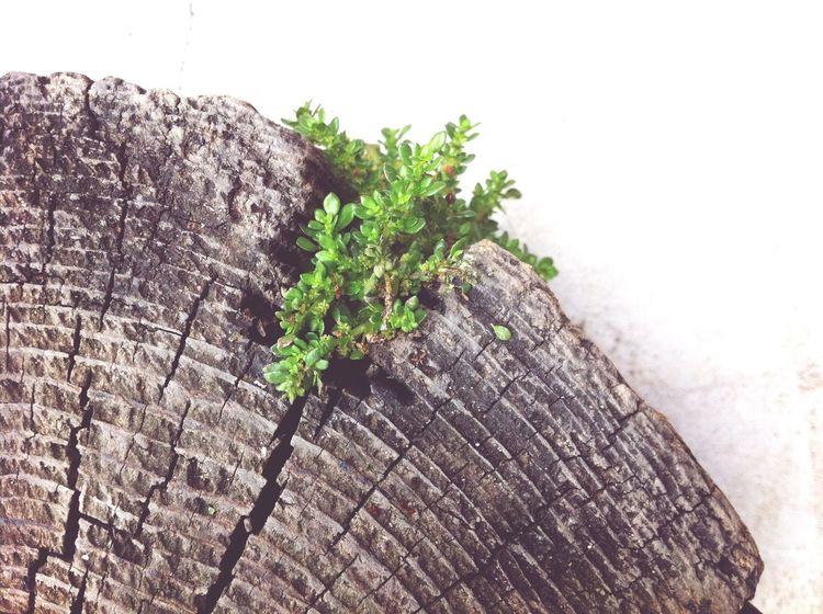 Nature Wood Enjoying Life