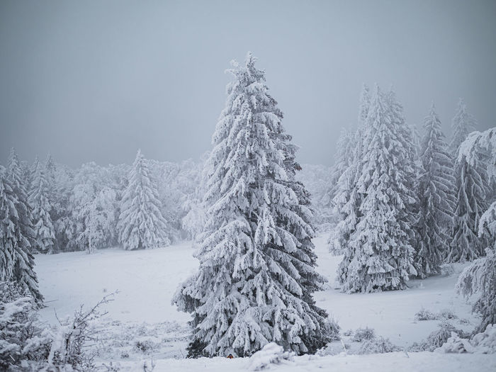 Snow covered trees on field against sky