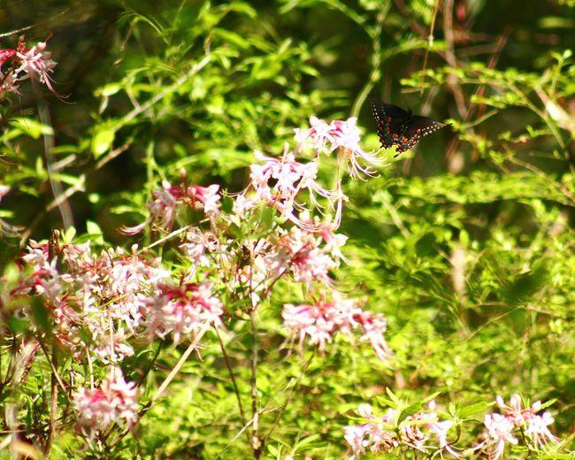 EyeEm Nature Lover Butterfly Flowers Alexandria LA Natural Beauty Louisiana Fly Away