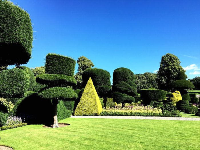 Topiary at garden against blue sky during sunny day