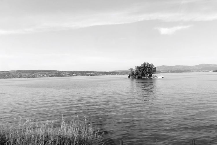 Lützelau (smallest island on lake Zuri) Water Sky Waterfront Tranquility Tree Scenics - Nature Beauty In Nature Tranquil Scene Outdoors Idyllic Non-urban Scene Cloud - Sky Day Nature