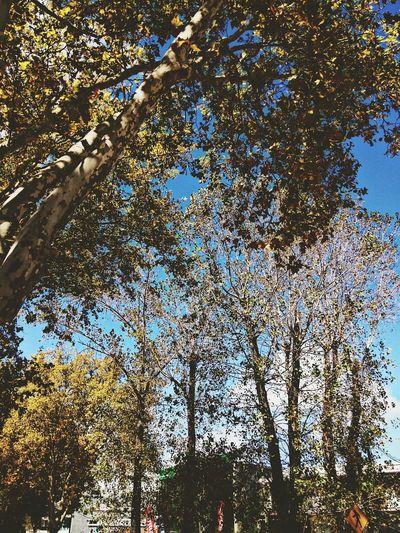 Autumn Autumn Leaves Nice Day