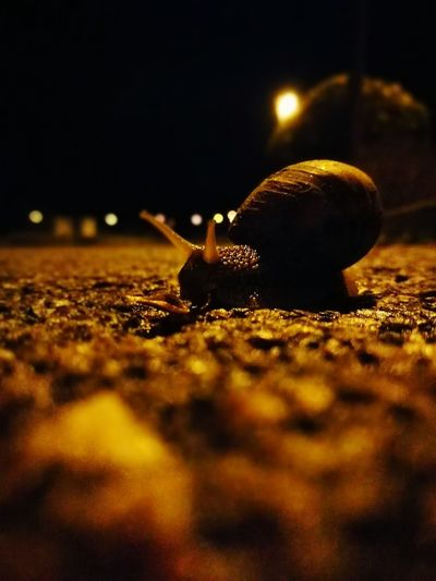 Reportagephotography Night City Illuminated Noedit Nofilter Huaweiphotography Beauty And Nature Snail Pet Portraits