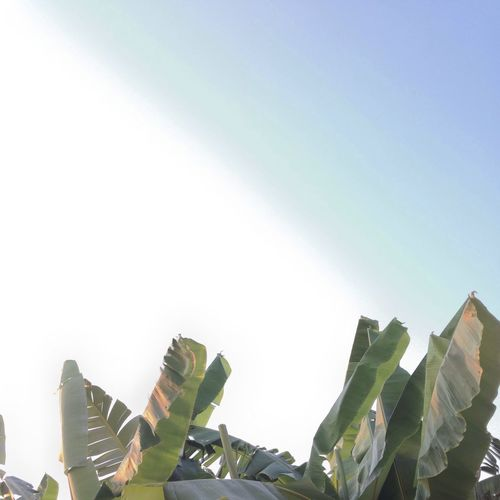 Negative Space Leaf Trees Tree Banana Bananatree Sky
