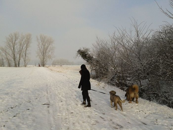 Side View Of Young Woman With Dogs Walking On Snow Field Against Sky