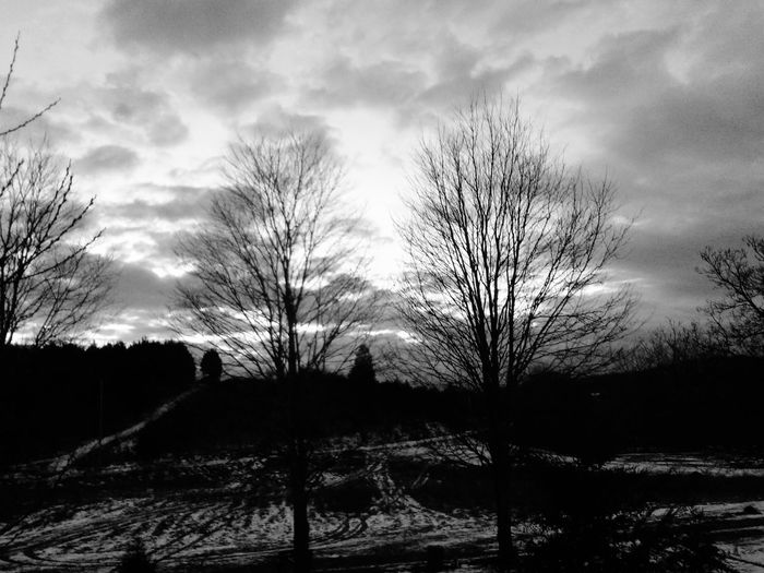 Bare trees against cloudy sky