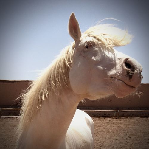 Pet Portraits Animal Themes Horse White Color Nature Outdoors The Week On EyeEm White Horse Animal Actors Cinema Star