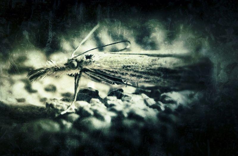 Strange little moth. Grungebug