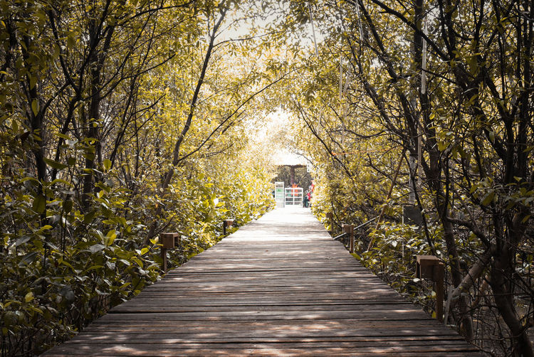 The Way Forward Direction Tree Plant Diminishing Perspective Nature Growth Footpath Architecture Outdoors Autumn Day Beauty In Nature Real People Walking Sunlight Tranquility Women Two People Park