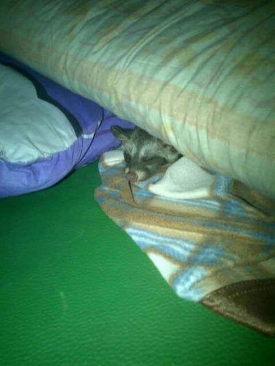 noby sleep