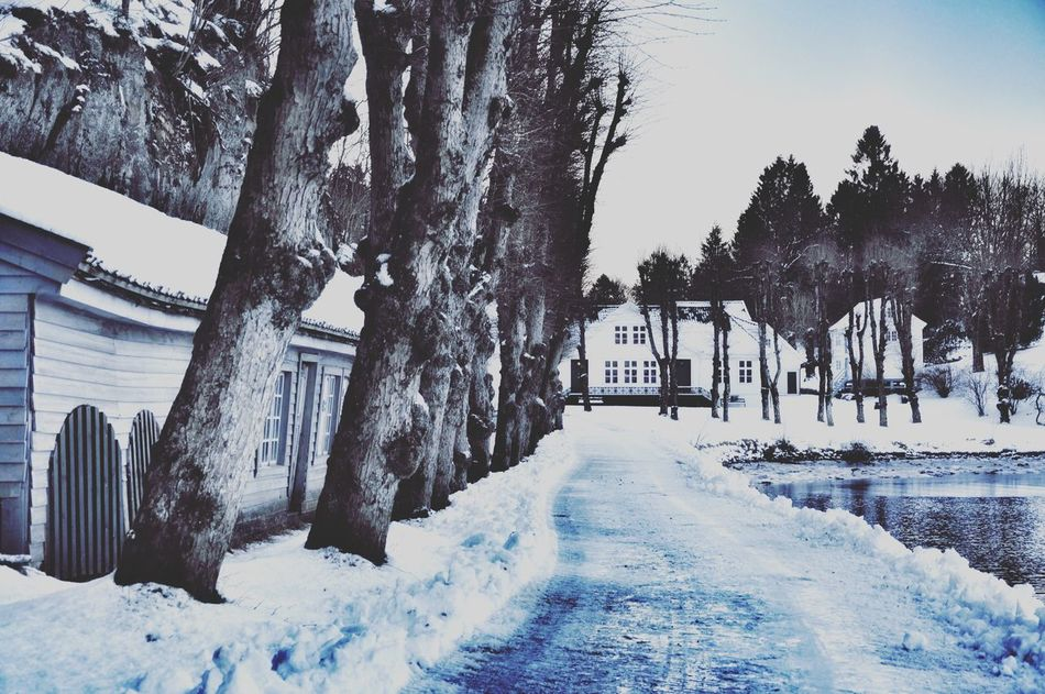 My beautiful neighborhood!! Rural Scenes Nature On Your Doorstep Old Buildings The Calmness Within Enjoying Life Taking Photos Landscape_Collection Melancholic Landscapes Eye4photography  Nature_collection Beautiful Nature Bergen Winter Wonderland Snow Nature Naturelovers Landscape EyeEm Nature Lover Hugging A Tree