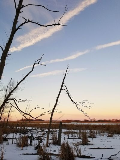 Bare trees in