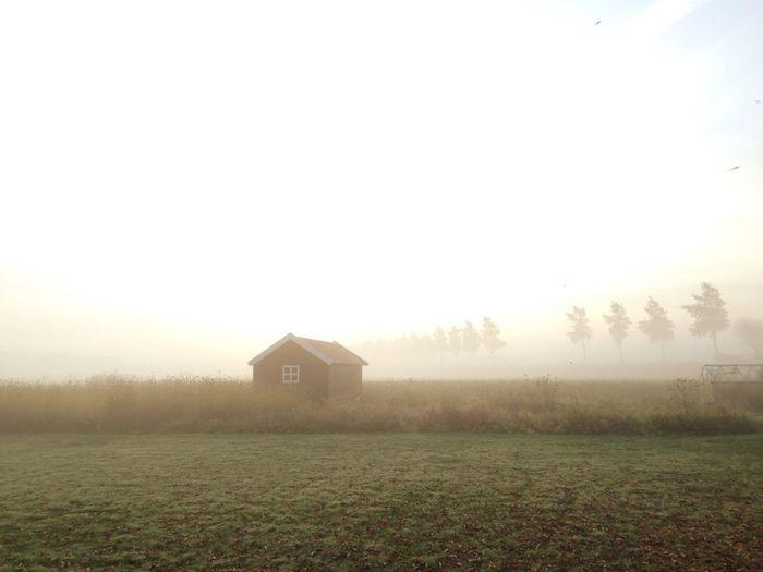 Mist Misty Nature Lonely House Kamperland Zeeland  Field Farmhouse Farm Agriculture Morning Misty Morning Trees The Netherlands
