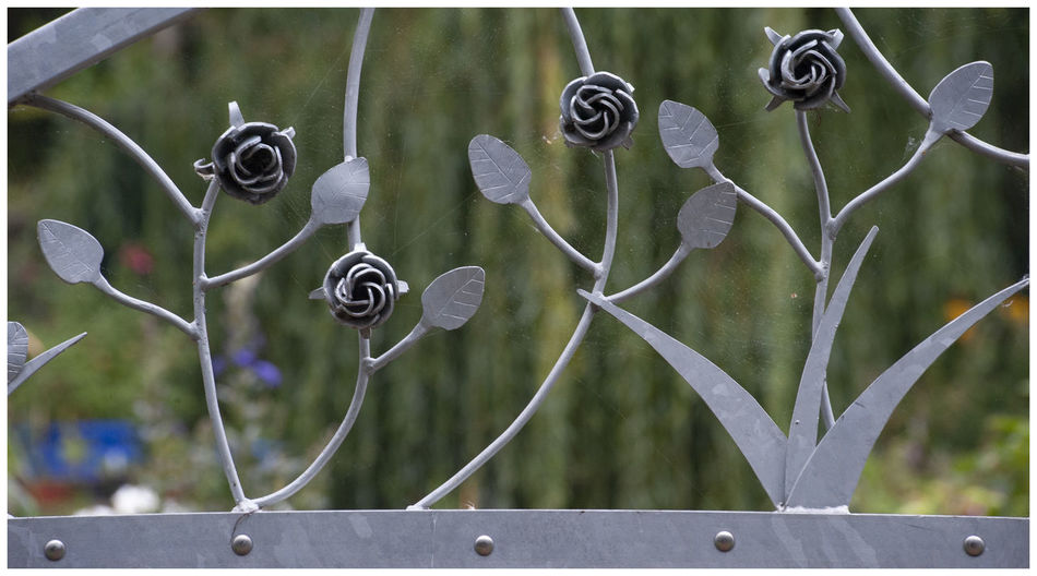 Close-up of metal fence against plants