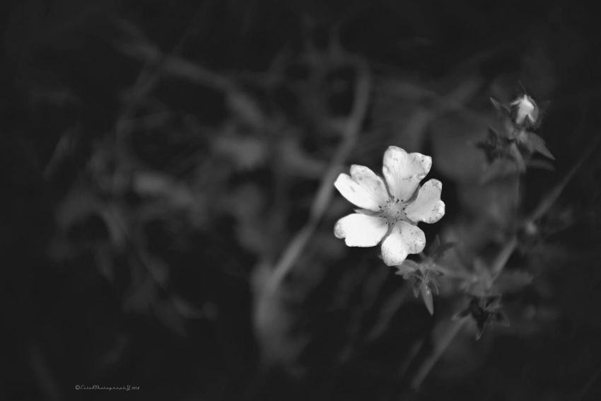 Beautiful Flower Collection in Black And White Flowers, Nature And Beauty EyeEm Best Shots - Flowers