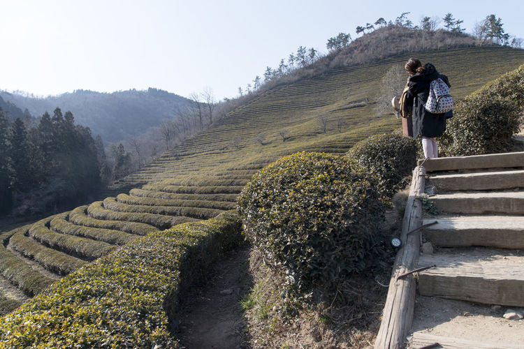 Rear View Of Woman Standing On Steps At Boseong Green Tea Field