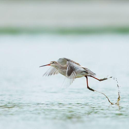 起 Bird Water