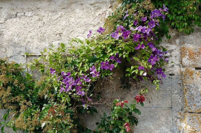 Flowering Plant Flower Plant Growth Fragility Freshness Vulnerability  Wall - Building Feature Plant Part Nature Wall Built Structure Architecture Pink Color