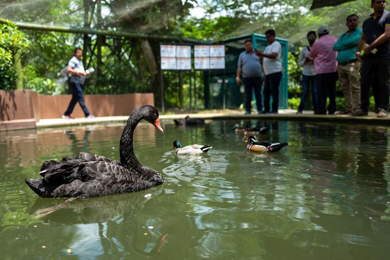 Kuala Lumpur Water Vertebrate Animal Wildlife Lake Animals In The Wild Bird Group Of Animals Waterfront Day Nature Swimming Reflection Plant Group Of People Water Bird Large Group Of Animals Men Flock Of Birds Birdpark