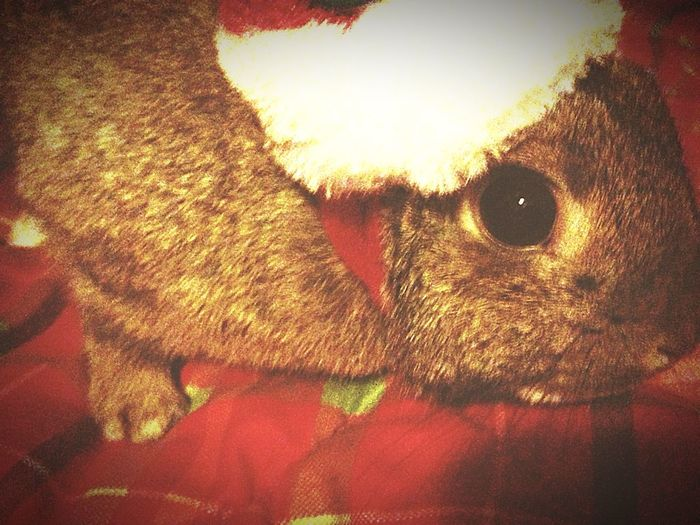 Clover🐰💕🎄🎁 Bunny 🐰 First Eyeem Photo