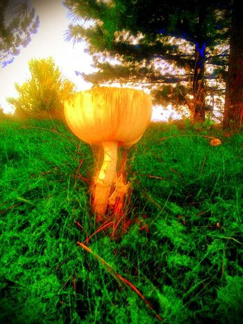 Nature Filters Shrooms Mushrooms