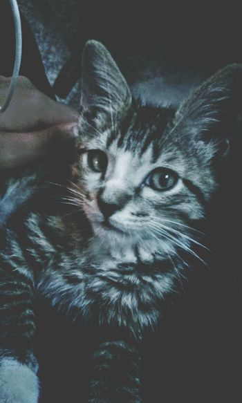 Pet Portraits Caricias Amor Miradas Miauuu 😺 Peluche Cats 🐱 Feline