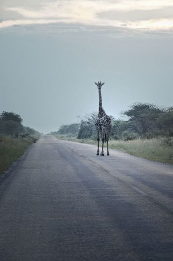 Rear view of man walking on road against sky