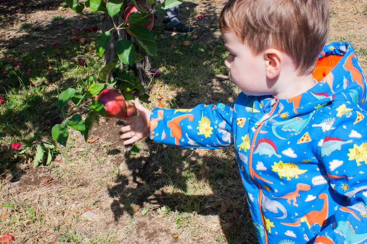 Boy reaches for an apple to pick it. Child Childhood Boys Men One Person Fruit Nature Males  Food Plant Innocence Outdoors Apples Picking Apples Picking Reaching Grabbing
