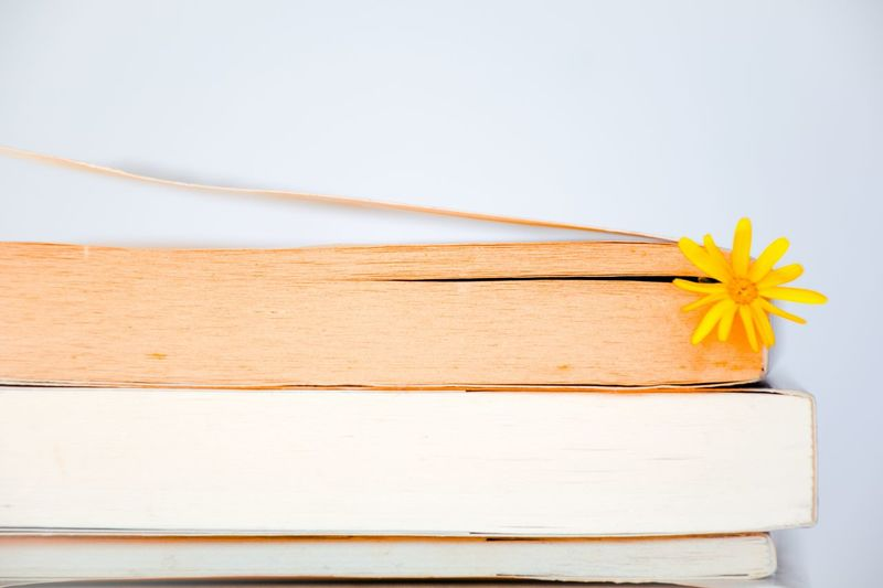 Close-up of yellow flowers in book against white background