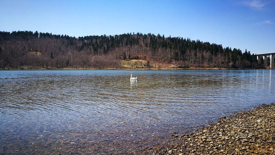 swan Water