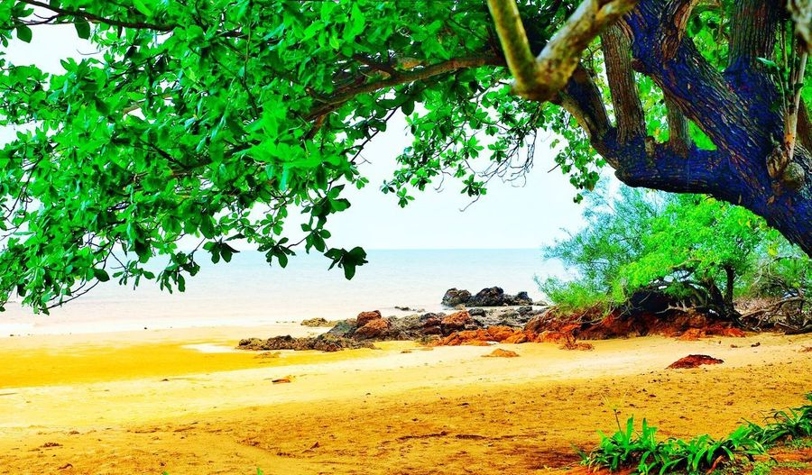 Someday Plant Tree Water Beach Land Nature Beauty In Nature Sea Sand
